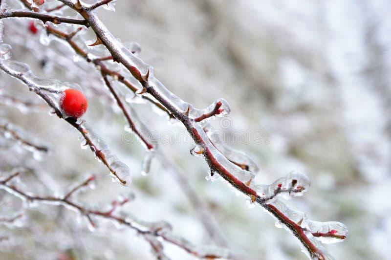 Manhã fria nos espinhos da seta vermelha fotografia de stock royalty free