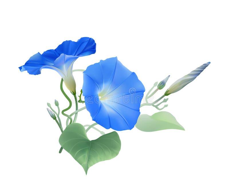 Manhã Glory Heavenly Blue ilustração royalty free