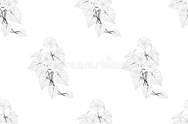 Manhã Glory Seamless no fundo branco Ilustração do vetor ilustração stock