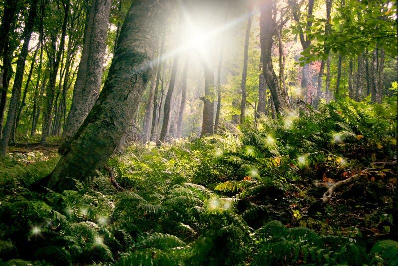 Manhã na floresta foto de stock royalty free