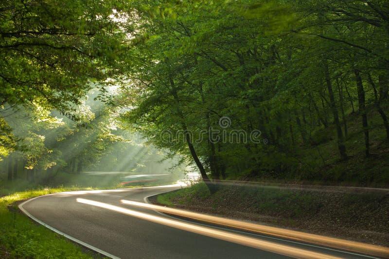 Manhã na floresta imagem de stock royalty free