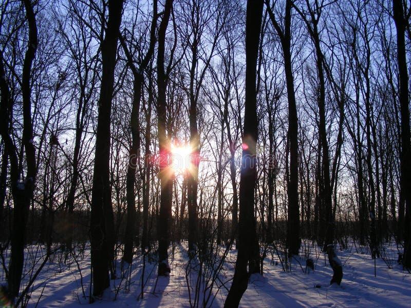 Manhã na floresta imagens de stock