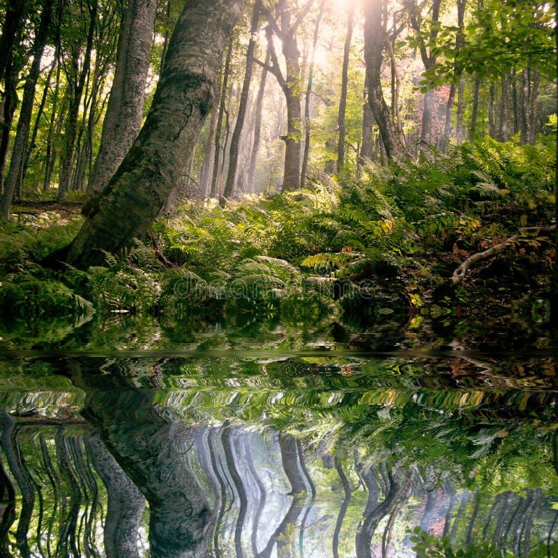 Manhã na floresta fotografia de stock royalty free