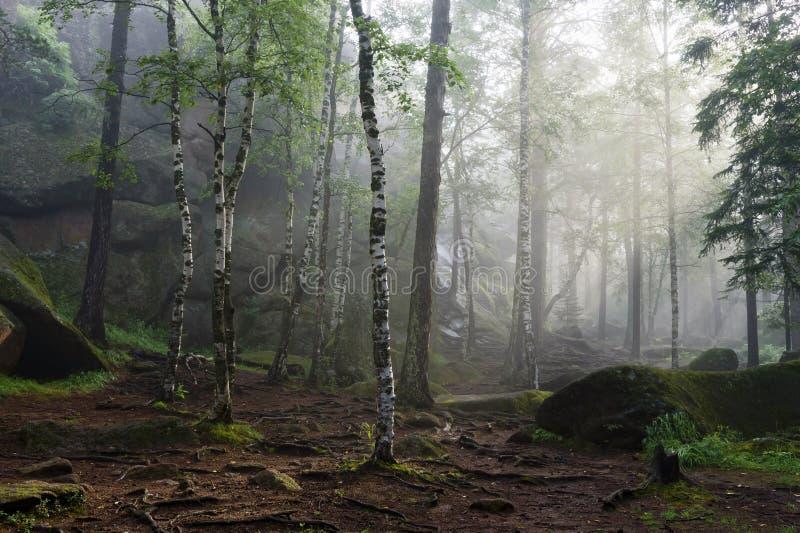 Manhã na floresta profunda foto de stock