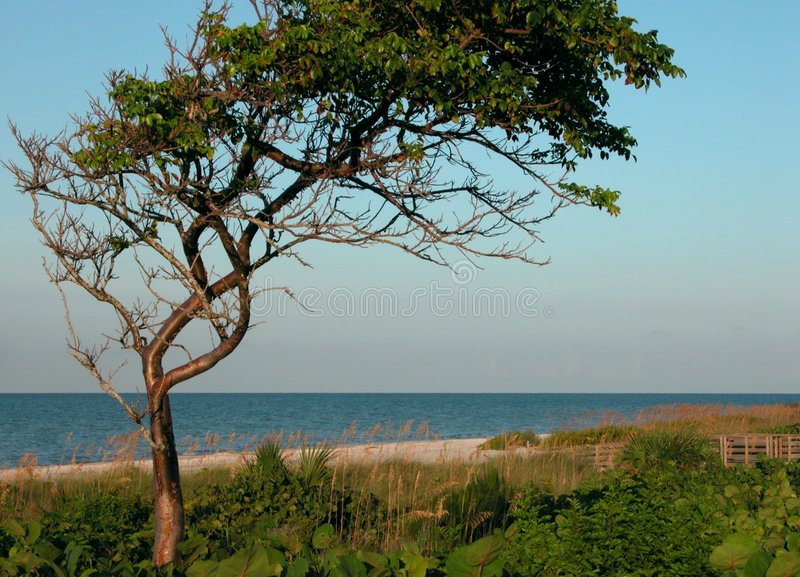 Manhã na praia imagem de stock