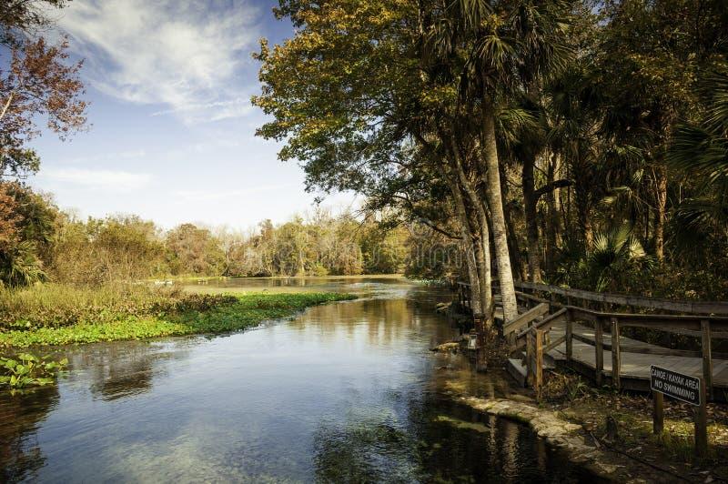 Manhã nas molas de Wekiva, Florida fotos de stock