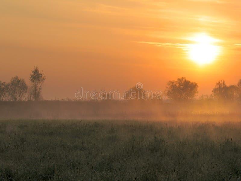 Manhã nevoenta. foto de stock royalty free