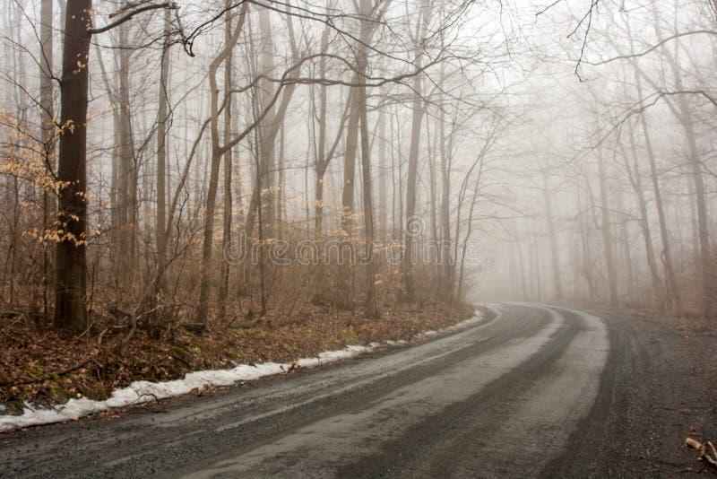 Manhã nevoenta fotografia de stock royalty free