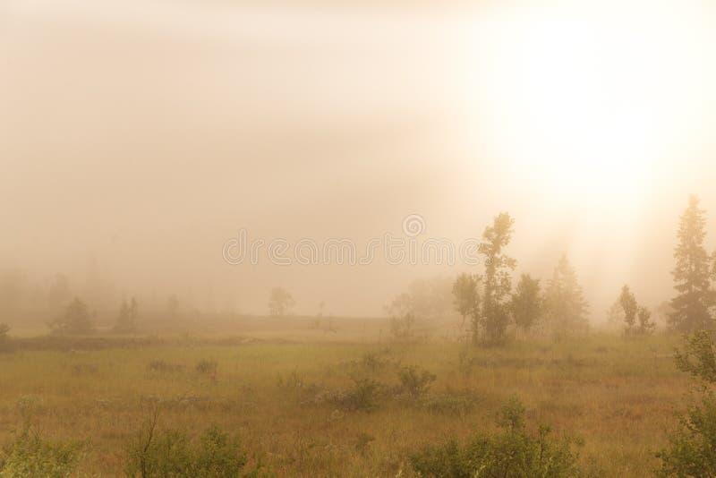 Manhã nevoenta adiantada nas montanhas suecos fotografia de stock