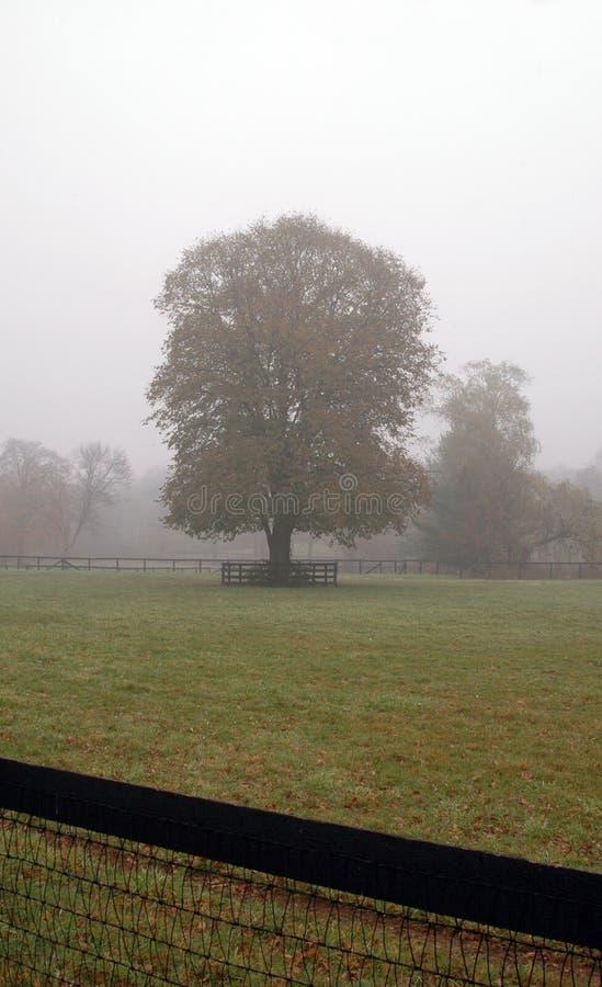 Manhã nevoenta da queda imagens de stock