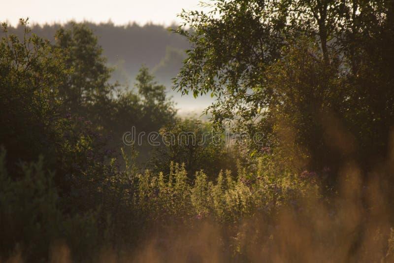 Manhã nevoenta do verão foto de stock