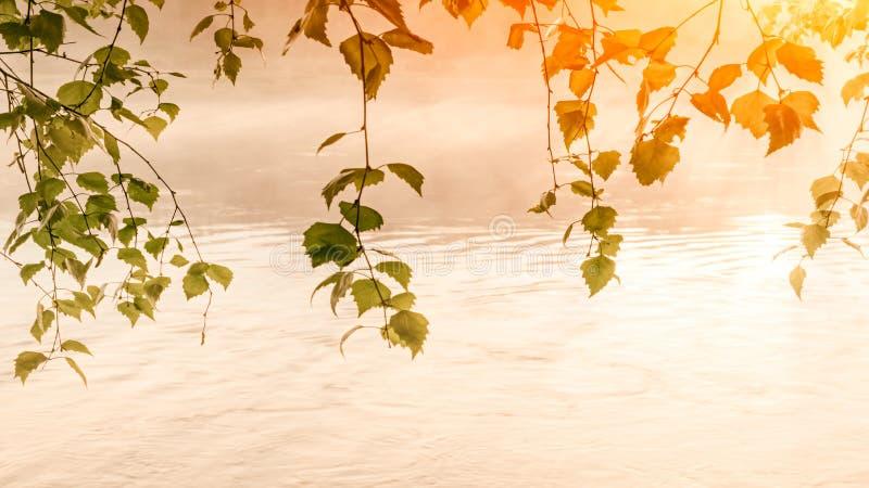 Manhã nevoenta do verão com birdsong, conceito do fundo do verão da mola imagem de stock