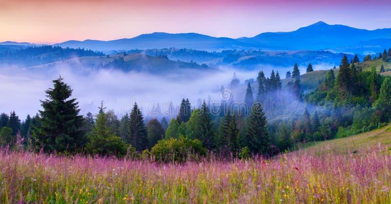 Manhã nevoenta do verão nas montanhas Carpathian imagem de stock royalty free