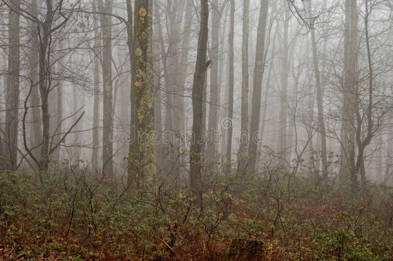 Manhã nevoenta na floresta fotos de stock royalty free