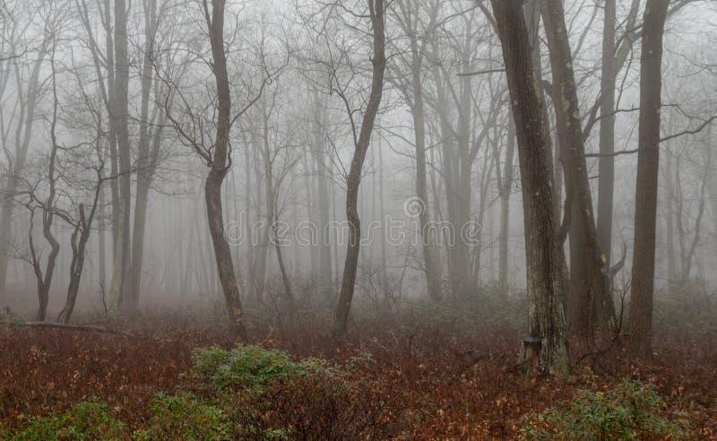 Manhã nevoenta na floresta imagem de stock royalty free