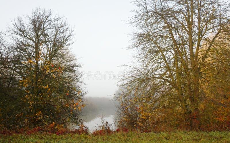 Manhã nevoenta na lagoa fotografia de stock