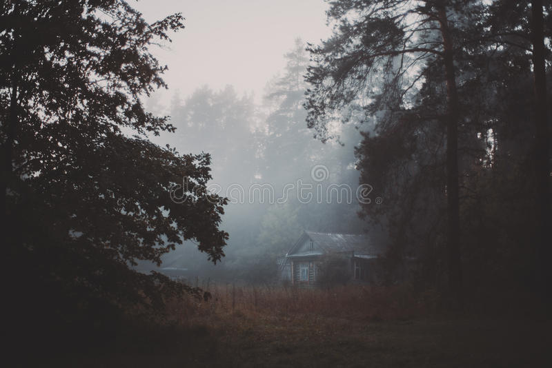Manhã nevoenta na vila na floresta fotos de stock royalty free