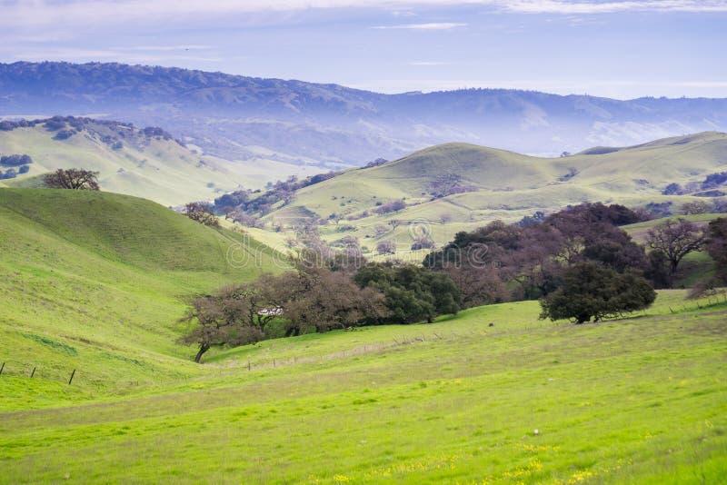Manhã nevoenta nos montes de San Francisco Bay sul, San Jose, Califórnia fotografia de stock