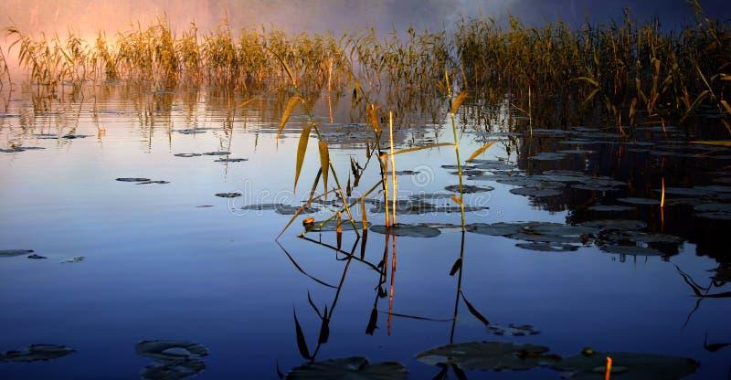 Manhã nevoenta pelo lago imagens de stock