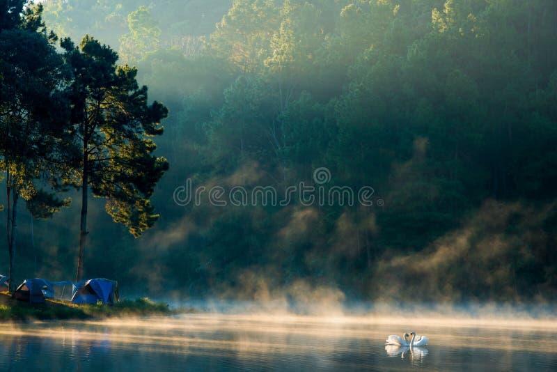 Manhã no lago pang Ung, província de Pang Ung Mae Hong Son fotos de stock