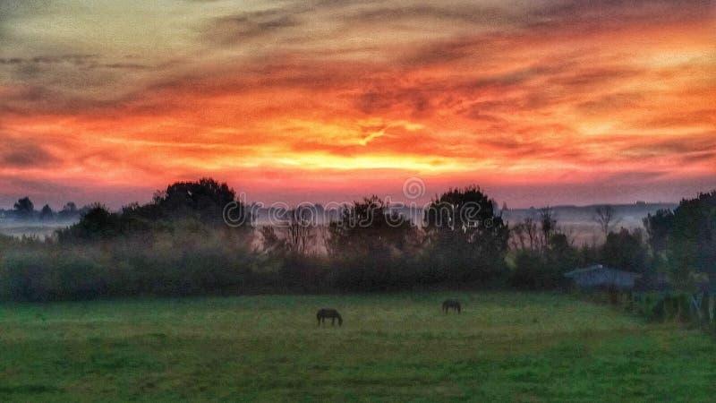 Manhã no rancho fotos de stock
