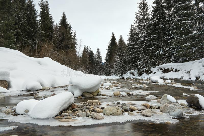 A manhã no rio congelado no inverno, foto do baixo ângulo, foco no gelo cobriu pedras, com as árvores coníferas em ambos os lados foto de stock