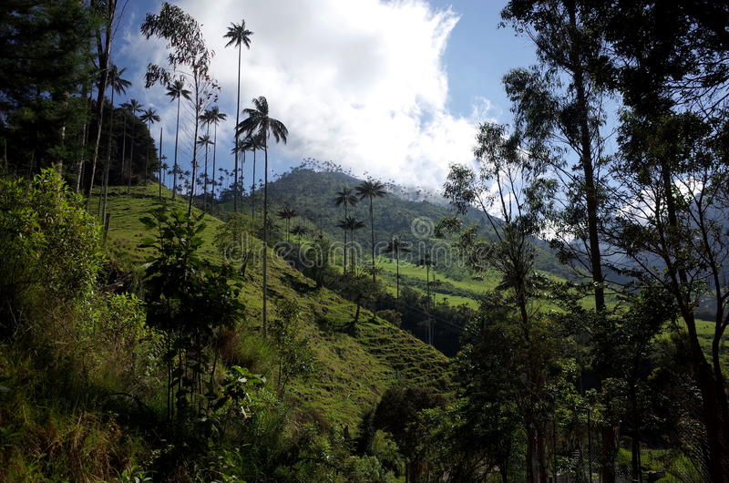 Manhã no vale de Cocora imagens de stock royalty free