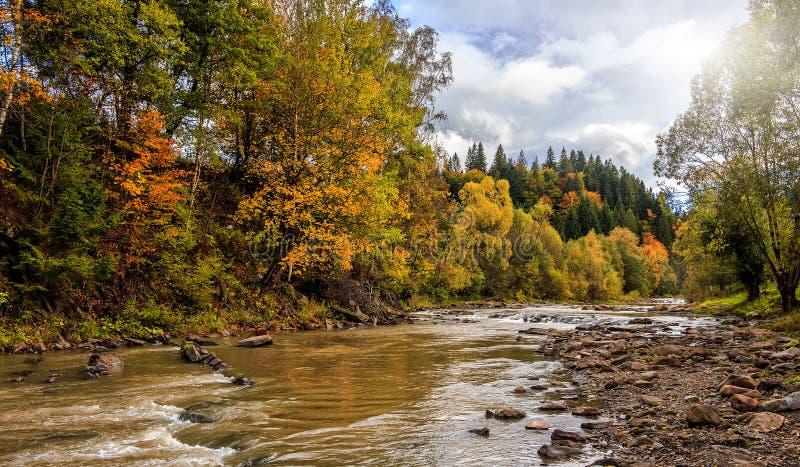 Manhã surpreendente no rio da montanha árvores coloridas que incandescem na luz solar fotos de stock