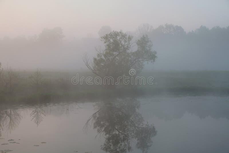 Manh? nevoenta Alvorecer fora da cidade Será um dia morno Reflexão de uma árvore em um lago fotos de stock
