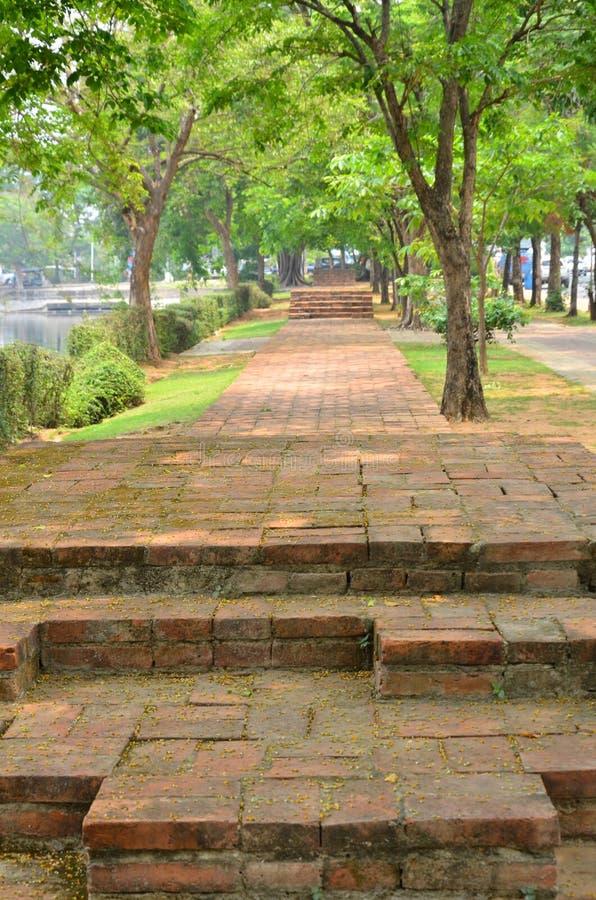 Manière de marche et arbre vert en parc historique de ville photographie stock libre de droits