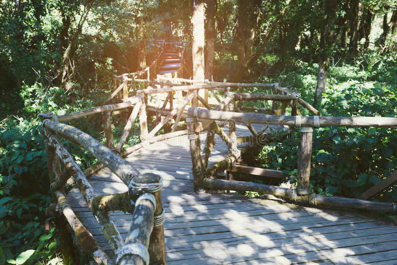 manière de promenade de forêt tropicale en itinéraire aménagé pour amateurs de la nature d'Ang Ka situé dans l'intha de Doi photos libres de droits