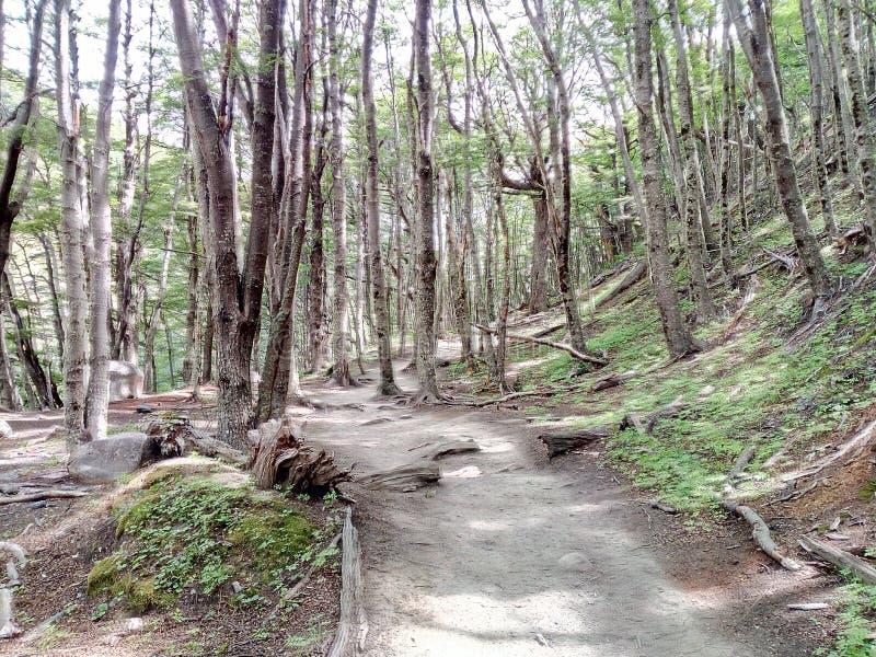 Manière du ` s de forêt photographie stock libre de droits