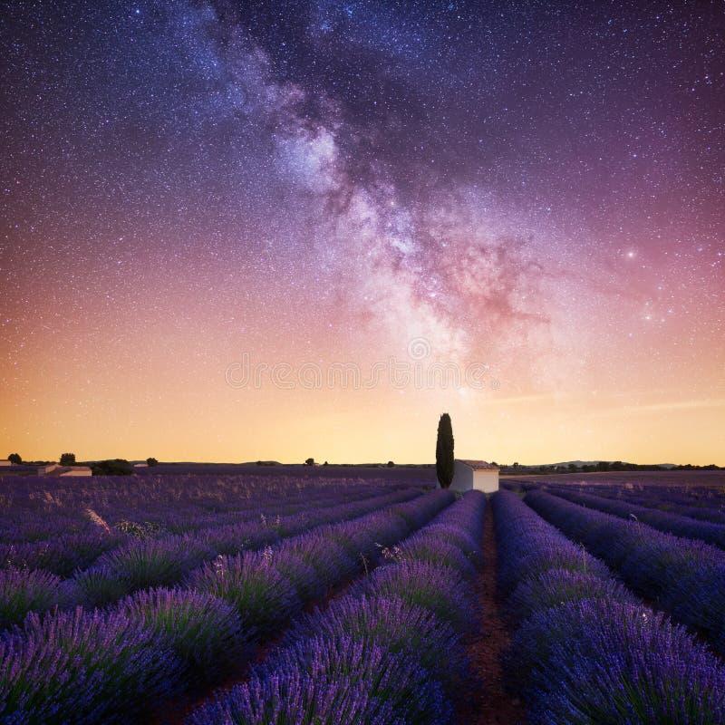 Manière laiteuse au-dessus de gisement de lavande dans des Frances de la Provence photographie stock libre de droits