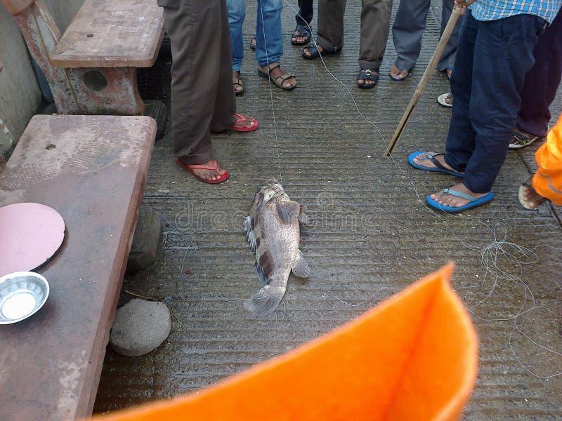 Manière unique de pêcher des poissons photographie stock