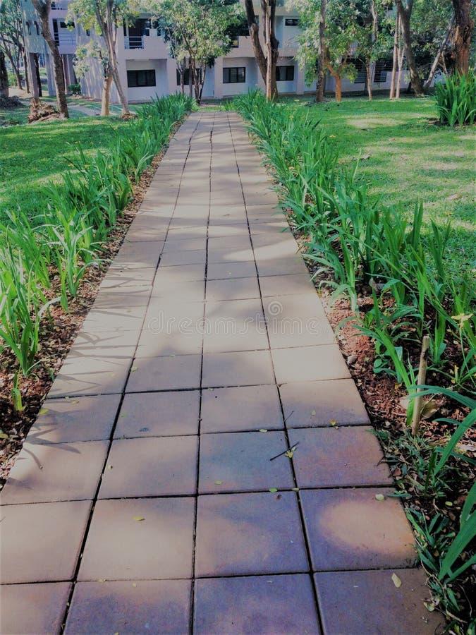 Manière verte de promenade en parc public chemin de marche extérieur dans naturel image libre de droits