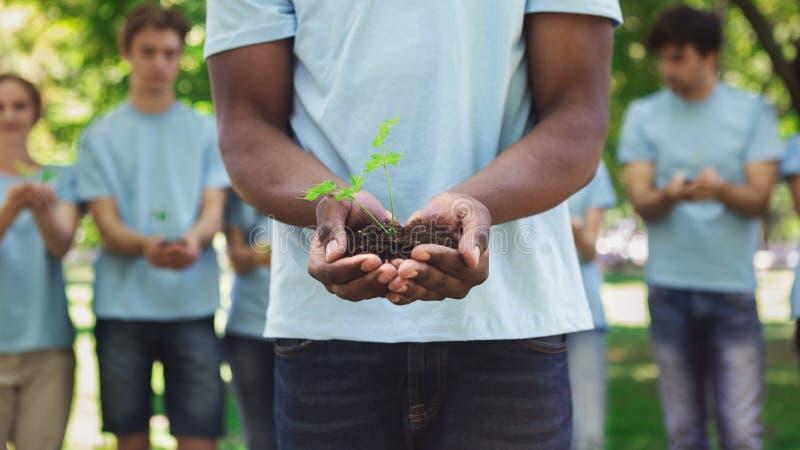 Mani afroamericane dell'uomo che tengono pianta in suolo immagine stock libera da diritti