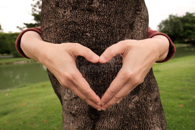 Mani che fanno la struttura di forma del cuore davanti all'albero fotografia stock