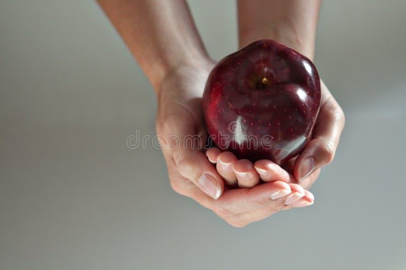 2 mani che formano una ciotola modellano con Apple in  immagini stock libere da diritti