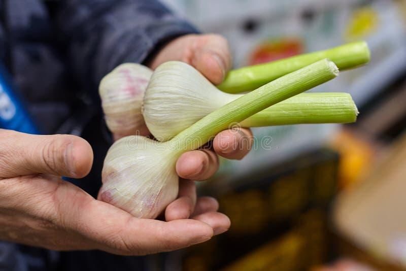 Mani che tengono aglio fresco sul mercato fotografia stock libera da diritti