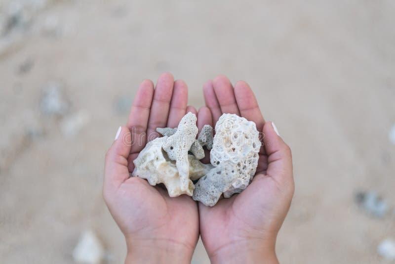 Mani che tengono e che mostrano i coralli sulla spiaggia fotografia stock libera da diritti