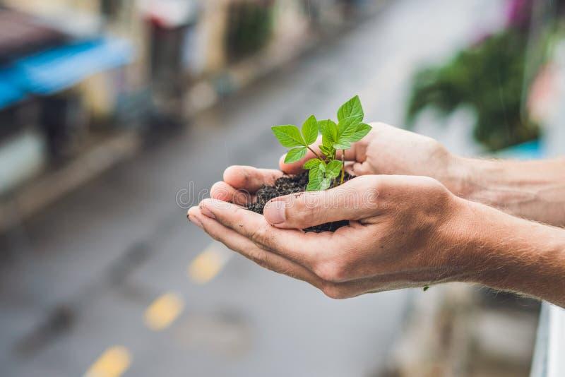 Mani che tengono giovane pianta verde, contro lo sfondo della città Il concetto di ecologia, protezione dell'ambiente immagine stock libera da diritti