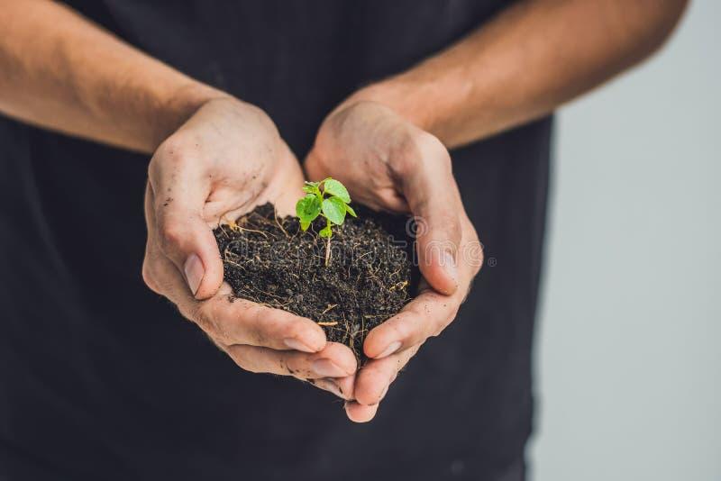 Mani che tengono giovane pianta verde, su fondo nero Il concetto di ecologia, protezione dell'ambiente immagine stock