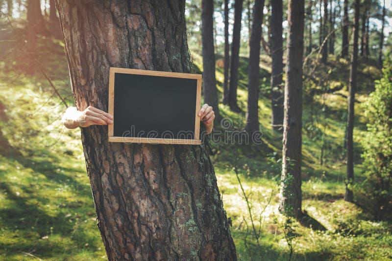 mani che tengono lavagna in bianco intorno all'albero nella foresta fotografia stock