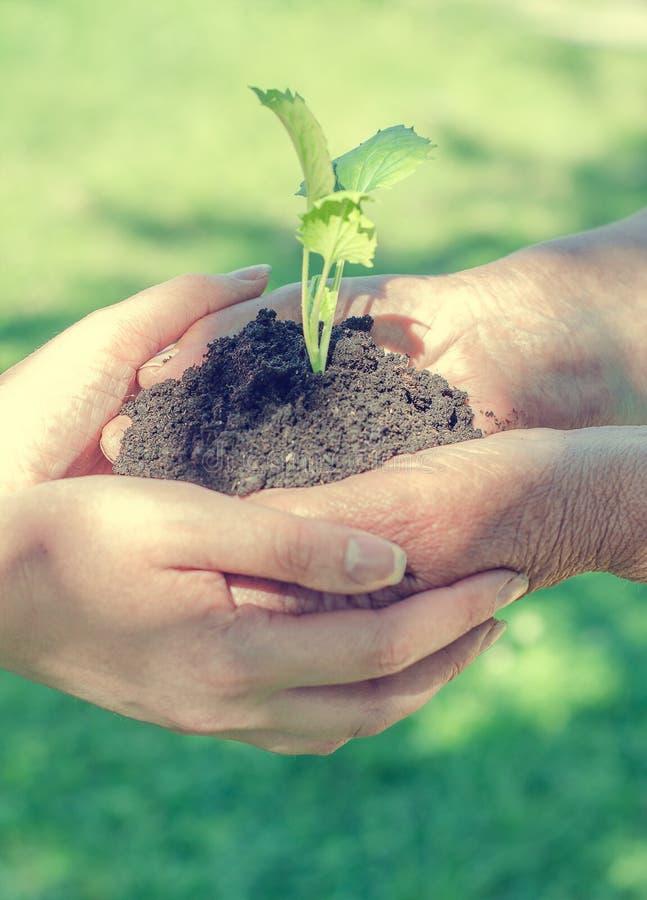 Mani che tengono suolo con il germoglio fotografia stock
