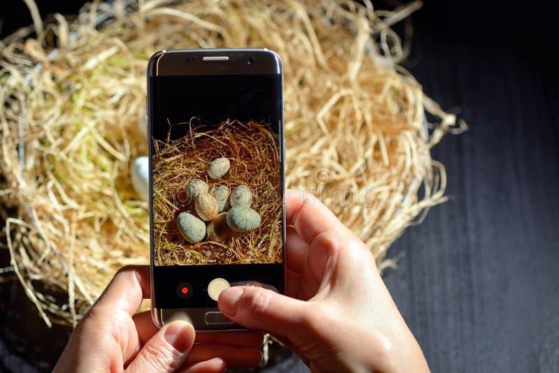 Mani che tengono telefono e che fanno foto delle uova di Pasqua immagine stock libera da diritti