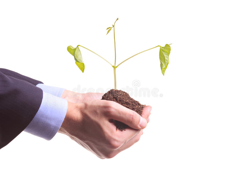 Mani che tengono un mucchio di terreno con un albero crescente fotografia stock