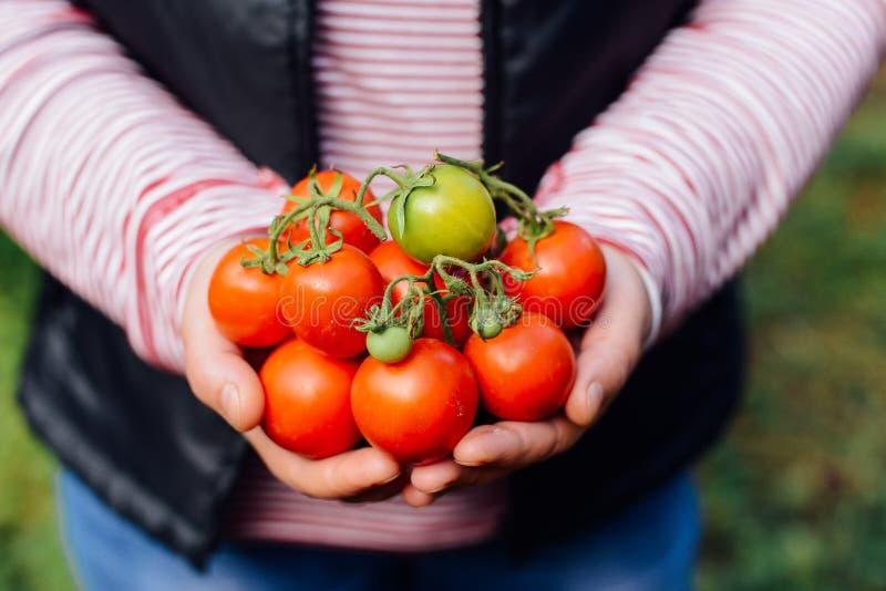 Mani degli agricoltori con i pomodori ed il pepe appena raccolti Freshl immagini stock libere da diritti