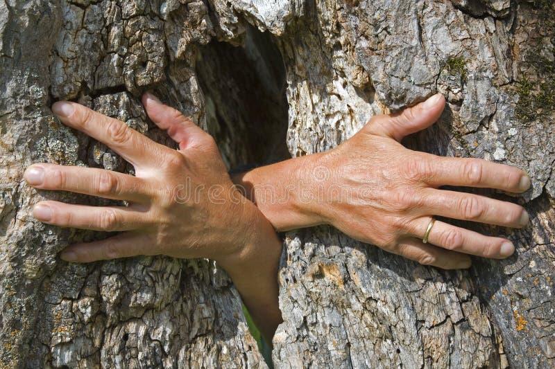 Mani del fantasma che crescono da un albero fotografie stock libere da diritti