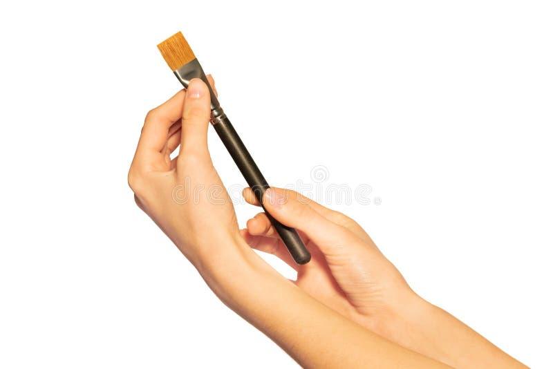 Mani del truccatore che tengono la spazzola dello shader su bianco fotografia stock libera da diritti