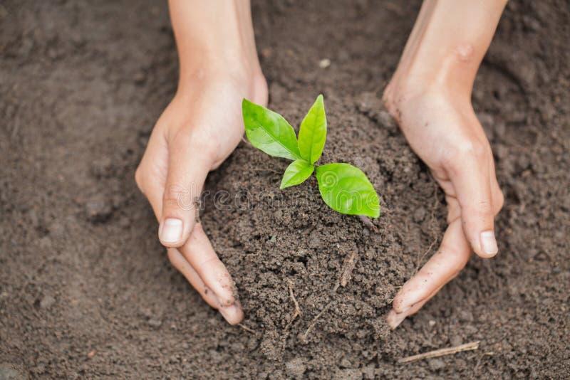Mani dell'agricoltore che coltivano e che consolidano albero che cresce sul suolo fertile, giornata per la Terra dell'ambiente ne immagine stock libera da diritti